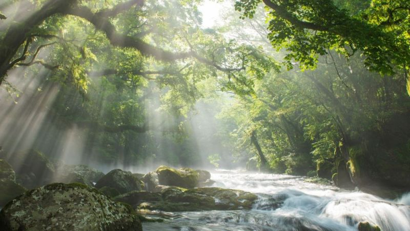 Das Bild zeigt einen Fluss, der von Bäumen umgeben ist.