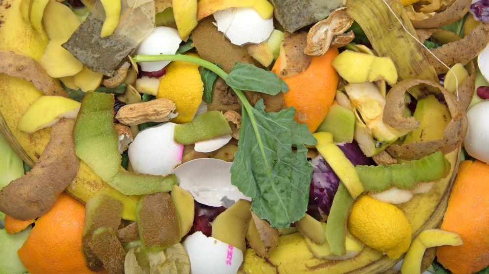 Das Foto zeigt Biomüll, wie Eierschalen, Apfel- und Apfelsinenschalen.