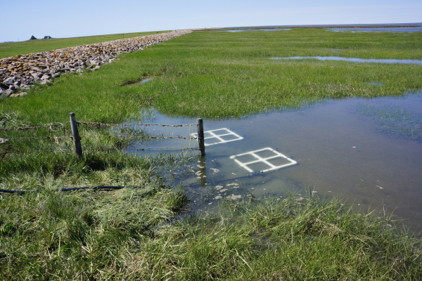 Investigation of the prokaryotic communities on samples protected and unprotected with protective current on a hallig. Here: Protection of the cabling in case of high tide introduced into the sediment.